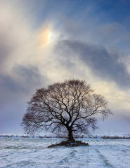 Sun dog (Parhelion) above a lone tree in a snowy winter field, Aberdeenshire, Scotland