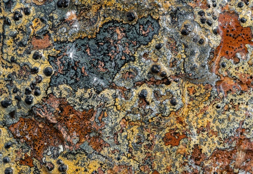 Colourful lichens on Lewisian Gneiss, between Suilven and Canisp, Assynt